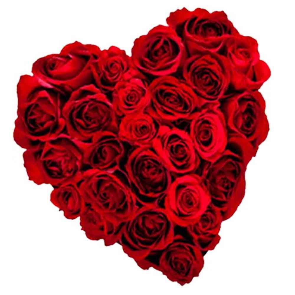 Valentine Roses-True Heart with Pure Feelings