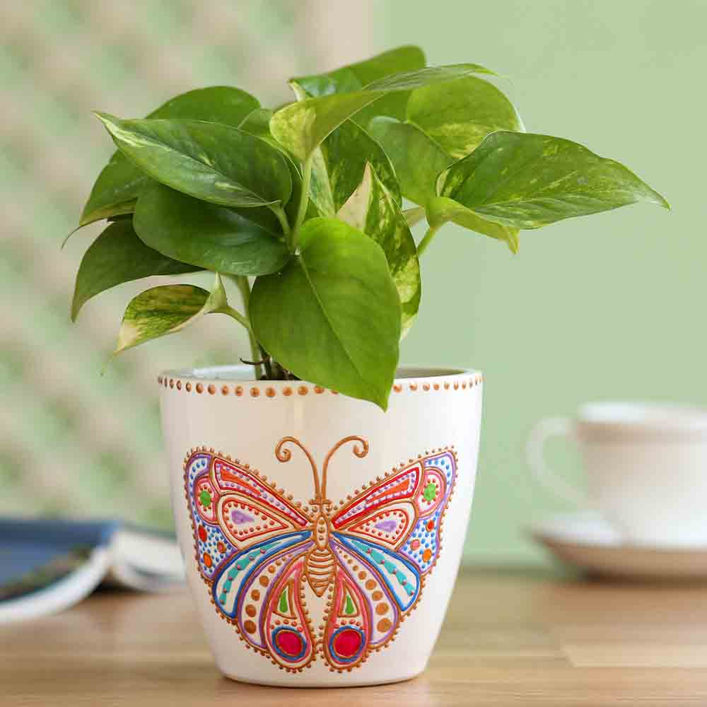 Money Plant In Hand Painted Butterfly Planter