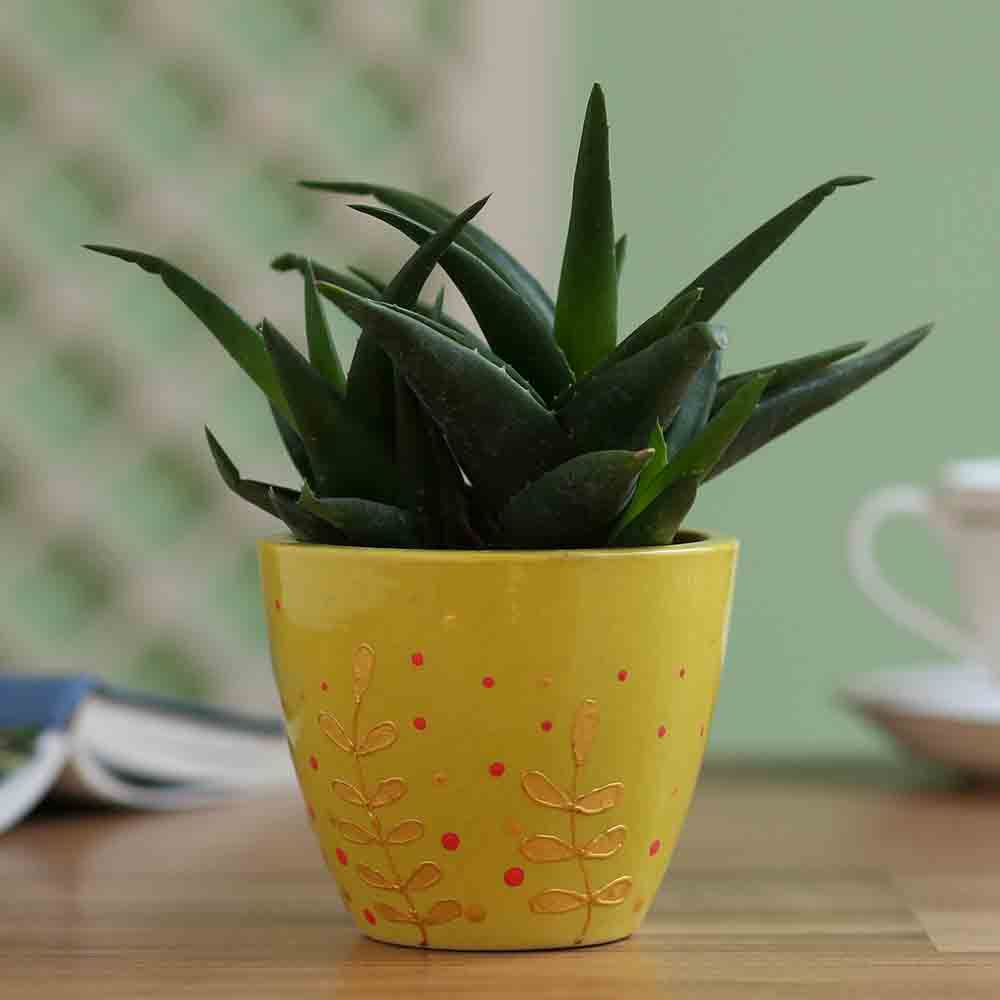 Aloe Gastro Plant In Hand Painted Planter