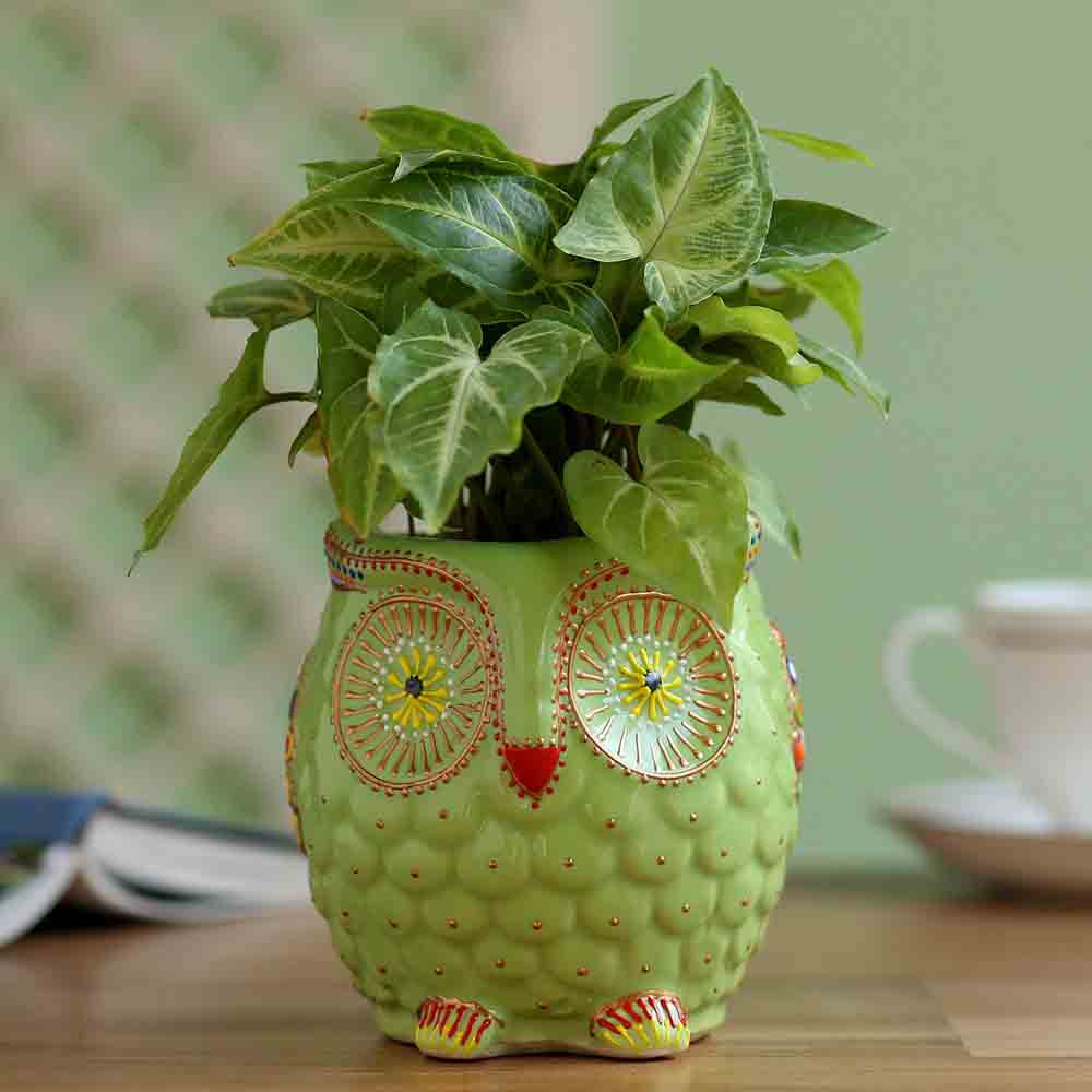 Syngonium Plant In Owl Hand Painted Planter